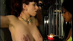 Busty brunette babe gets her tits tortured by her sexy mistress