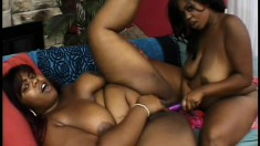 Curvaceous black lesbians surrender their needy pussies to one another